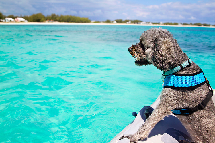 Sailing-Blog-Cruising-Bahamas-Caribbean-Tuesday-Tell-Tales-Dog-LAHOWIND-eIMG_2408