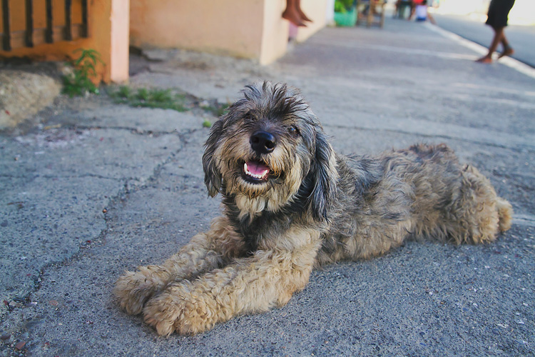 Sailing-Blog-Cruising-Dominican-Republic-Luperon-Dogs-Street-LAHOWIND-eIMG_8739