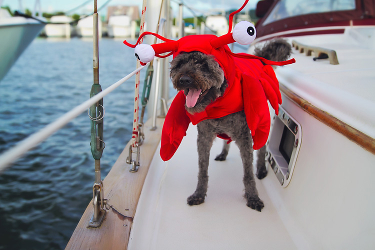 Sailing-Blog-Cruising-Caribbean-LAHOWIND-Boat-Dog-Halloween-Lobster-eIMG_2891