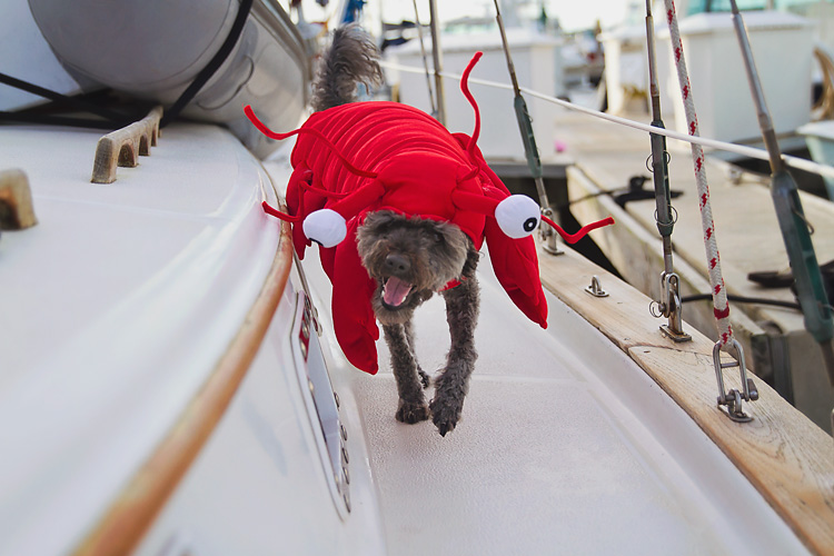 Sailing-Blog-Cruising-Caribbean-LAHOWIND-Boat-Dog-Halloween-Lobster-eIMG_2980