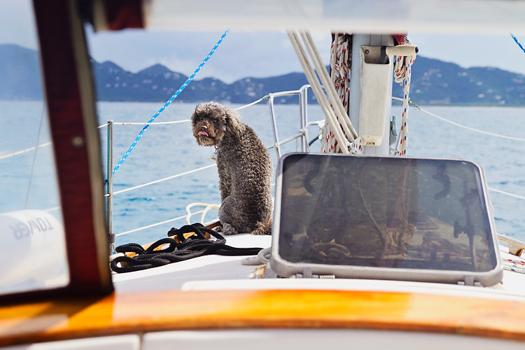 Sailing-Blog-Cruising-Caribbean-BVI-Boat-Dog-Overboard-Tuesday-Tell-Tales-Cruising-with-Pets-LAHOWIND-eIMG_0231