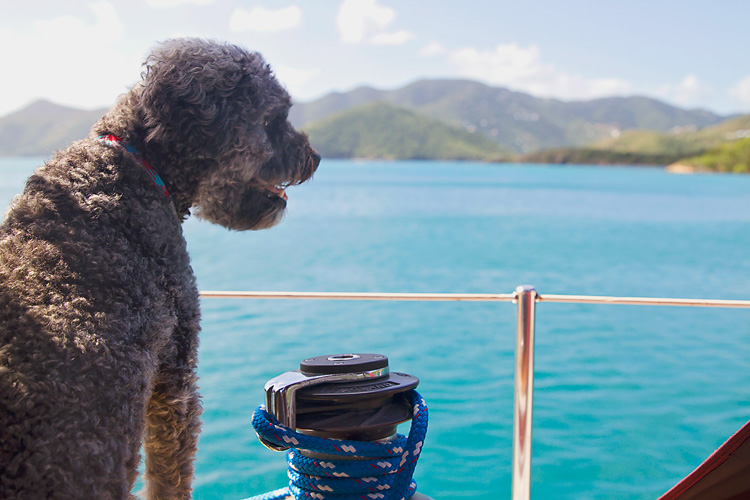 Sailing-Blog-Cruising-USVI-St-John-Hansen-Princess-Bay-Christmas-Winds-LAHOWIND-Boat-Life-eIMG_9018
