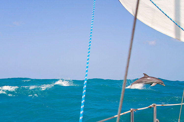 Sailing-Blog-Cruising-Caribbean-Puerto-Rico-Parguera-Cayo-Enriquee-to-Puerto-Real-LAHOWIND-Lighthouse-Dolphin-Photos-2015-eIMG_3333