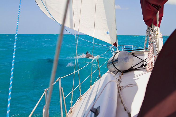 Sailing-Blog-Cruising-Caribbean-Puerto-Rico-Parguera-Cayo-Enriquee-to-Puerto-Real-LAHOWIND-Lighthouse-Dolphin-Photos-2015-eIMG_3343