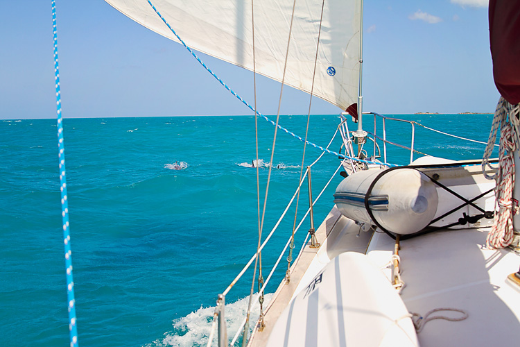 Sailing-Blog-Cruising-Caribbean-Puerto-Rico-Parguera-Cayo-Enriquee-to-Puerto-Real-LAHOWIND-Lighthouse-Dolphin-Photos-2015-eIMG_3351