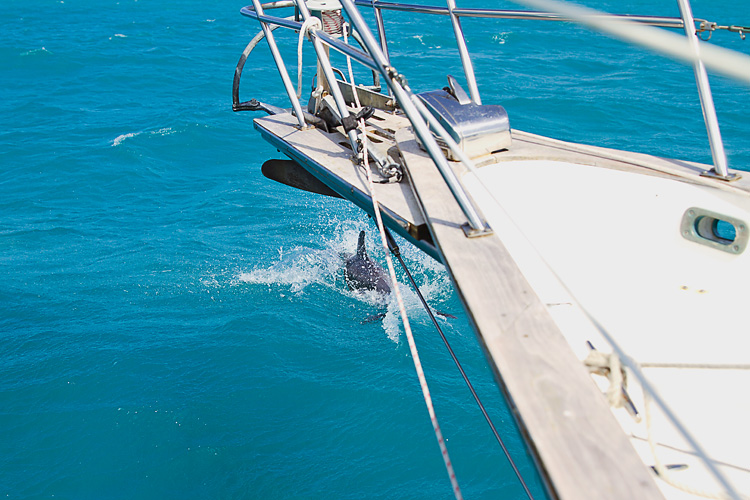 Sailing-Blog-Cruising-Caribbean-Puerto-Rico-Parguera-Cayo-Enriquee-to-Puerto-Real-LAHOWIND-Lighthouse-Dolphin-Photos-2015-eIMG_3387