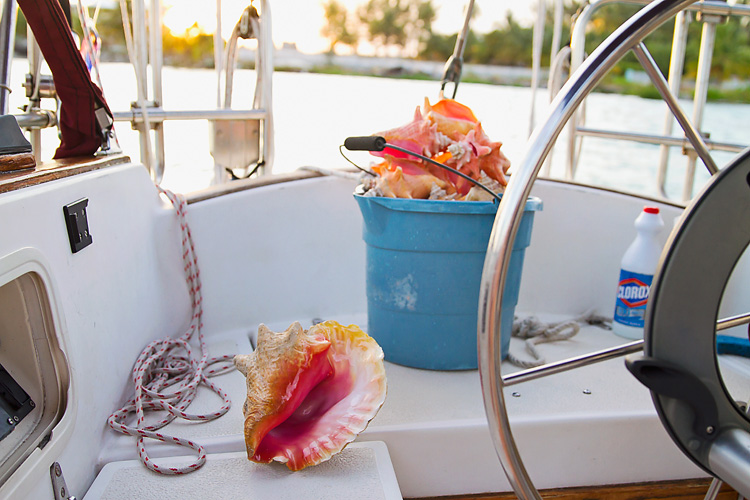 Sailing-Blog-Cruising-Bahamas-Caribbean-Conch-Shell-King-Helmet-Conch-Photos-LAHOWIND-Bimini-Sailboat-Adventure-2015-eIMG_6846