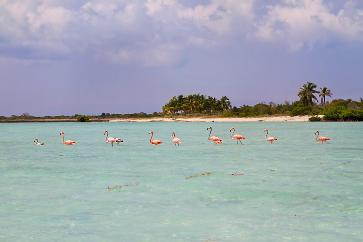 Sailing-Blog-Cruising-Bahamas-Mayaguana-Pink-Flamingos-Photos-LAHOWIND-2015-Sailboat-Adventure-eIMG_4993