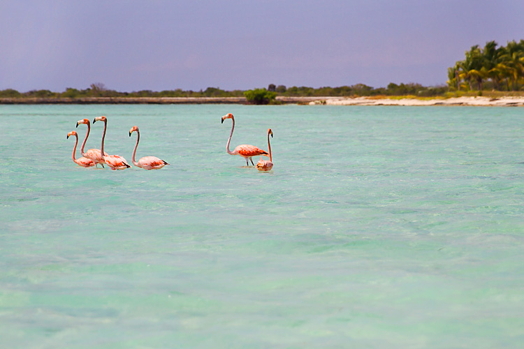Sailing-Blog-Cruising-Bahamas-Mayaguana-Pink-Flamingos-Photos-LAHOWIND-2015-Sailboat-Adventure-eIMG_5037