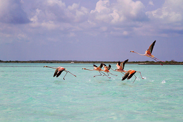 Sailing-Blog-Cruising-Bahamas-Mayaguana-Pink-Flamingos-Photos-LAHOWIND-2015-Sailboat-Adventure-eIMG_5043